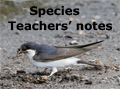 species teachers notes