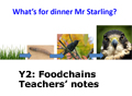 y2 food chains teachers notes