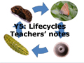 Y5 life cycles teachers notes